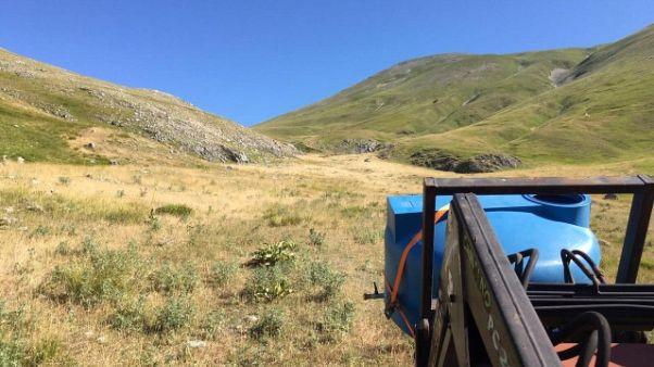 Bestiame senz'acqua a Castelluccio