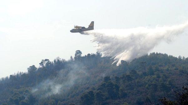 Brucia il Gargano,distrutti ettari bosco