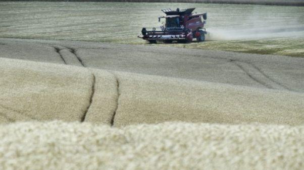 Les concentrations accrues de CO2 menacent la valeur nutritive des récoltes clés