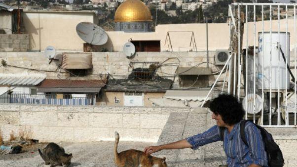 """C'est la nuit à Jérusalem, l'heure où rôde la """"dame aux chats"""""""