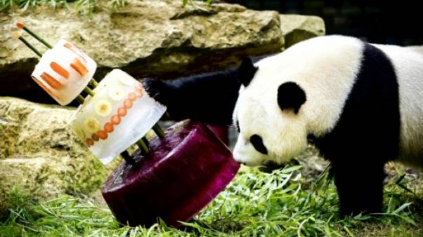 Pays-Bas: des gâteaux glacés pour l'anniversaire de deux pandas géants