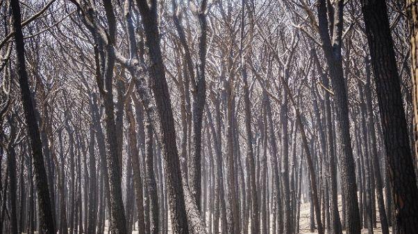 Vesuvio, fiamme in località Montedoro