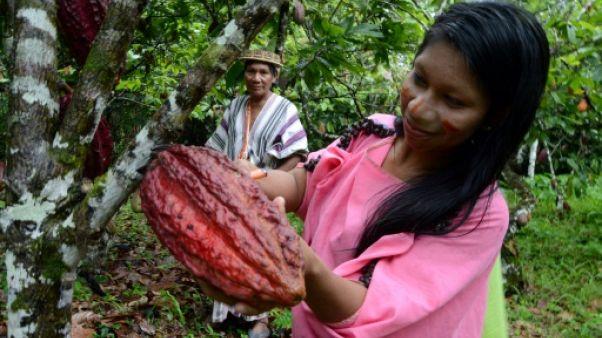 Au Pérou, une vallée remplace la drogue par du cacao et du café