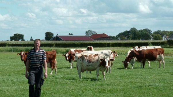 """Pays-Bas: un site de """"rencontre"""" pour sauver les fermes"""