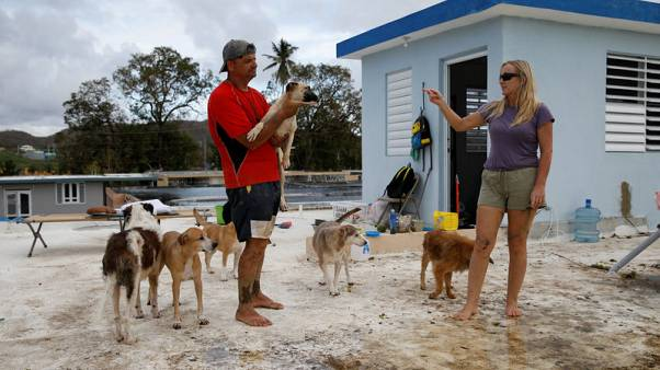 Couple defy Hurricane Maria on roof to save pets - lots of them