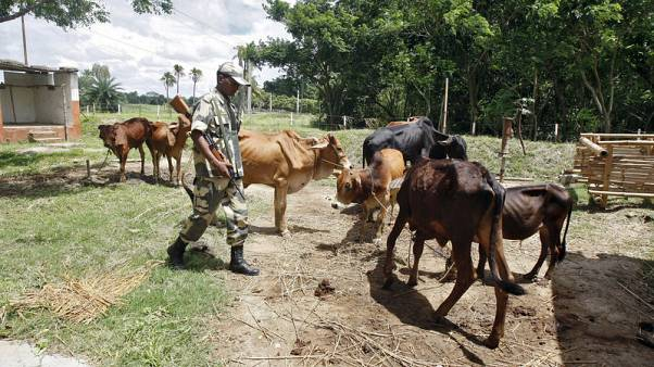 India struggles to rein in border flows of cattle and Rohingya