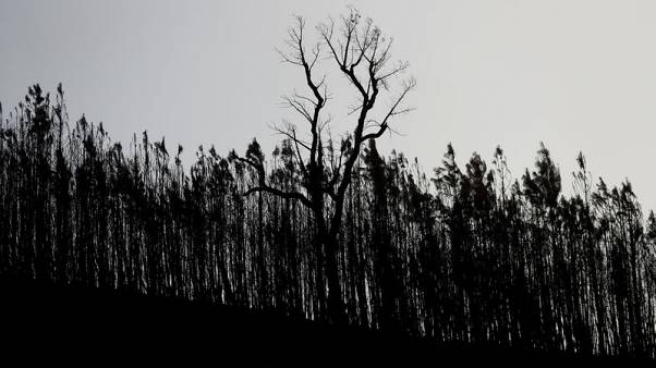 Scorched earth of Portugal fires may hold seeds of a renewal