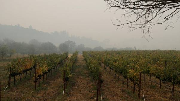 Wildfires could yield California wines with a hint of smoke