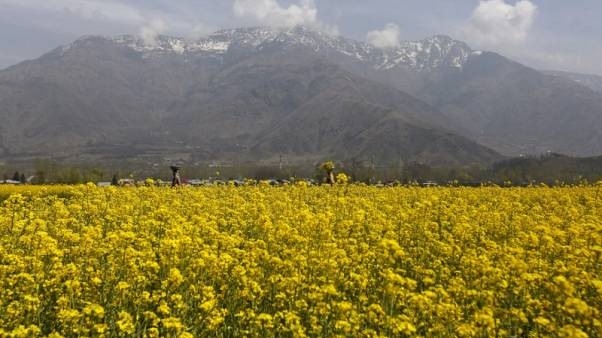 India drags feet on GM mustard permit amid powerful opposition