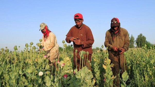 صورة من أرشيف رويترز لرجال أفغان في حقل للأفيون في جلال أباد.
