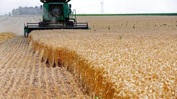حقل مزروع بالقمح في أمريكا. صورة من أرشيف رويترز