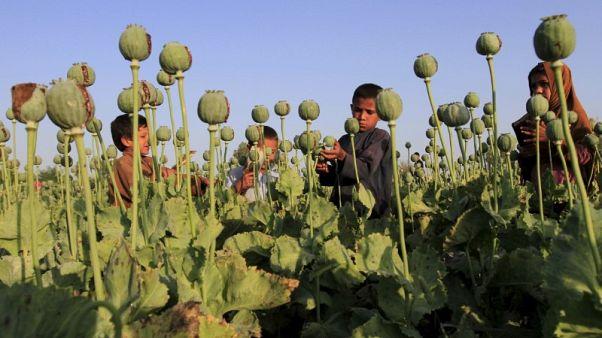 U.S. strikes on Taliban opium labs won't work, say Afghan farmers