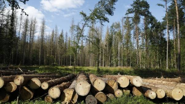Activists say Poland breaches EU laws on logging in ancient forest