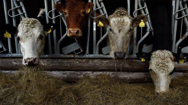 Farmer Philip Maguire's Hereford and Aberdeen Angus cattle eat silage on his farm in Stepaside, Ireland November 16, 2017. Picture taken November 16, 2017. REUTERS/Clodagh Kilcoyne