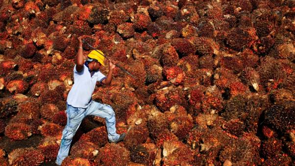 FILE PHOTO: A worker collects palm oil fruit inside a palm oil factory in Sepang, outside Kuala Lumpur, Malaysia February 18, 2014. REUTERS/Samsul Said/File Photo