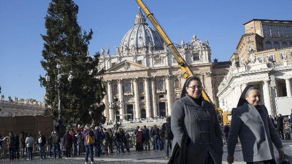 Albero Natale arrivato piazza S.Pietro