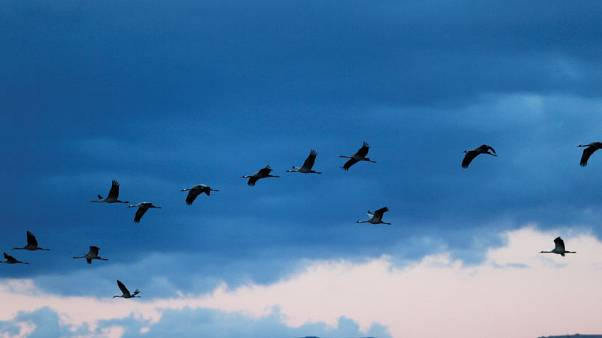 الطيور المهاجرة تقضي الشتاء في إسرائيل بسبب تغير المناخ
