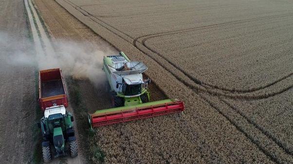 فرنسا تتجه لتحميل أول شحنة من القمح الصلد إلى السعودية