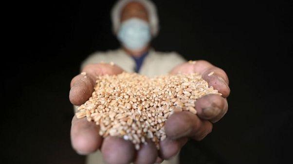 وزارة الزراعة المصرية تحدث سياستها لإنهاء ارتباك الإرجوت