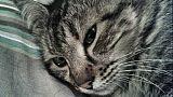 Comune cura gatto malato Aids,è polemica