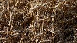 صادرات القمح الأوكرانية إلى الشرق الأوسط تقفز 46% في أربعة أشهر
