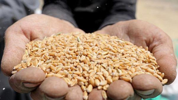 وزارة: احتياطي القمح الاستراتيجي لمصر يكفي لمنتصف أبريل