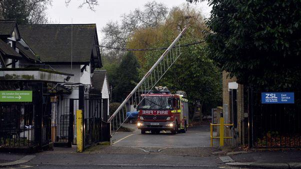نفوق حيوان بري وفقدان عدد آخر في حريق حديقة حيوان لندن
