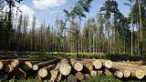 Poland to respect EU top court ruling on Bialowieza forest logging