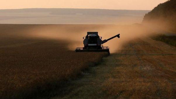مصر تشتري 180 ألف طن من القمح الروسي في مناقصة