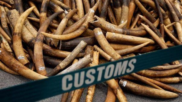 حظر بيع العاج في الصين يبدأ يوم الأحد