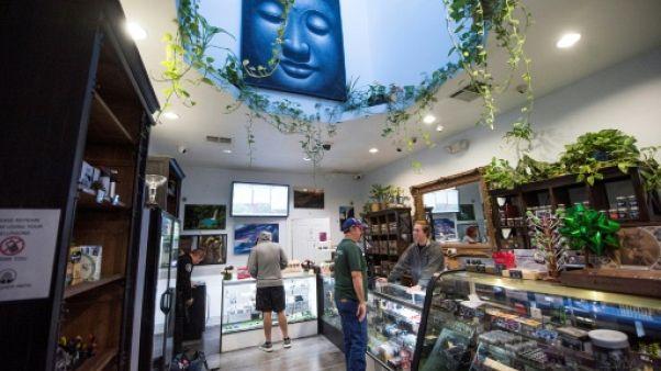 Avec la légalisation de la marijuana, ruée vers l'or vert en Californie