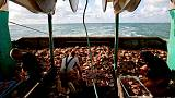 'White gold' on deck of French trawler signals bumper haul of scallops