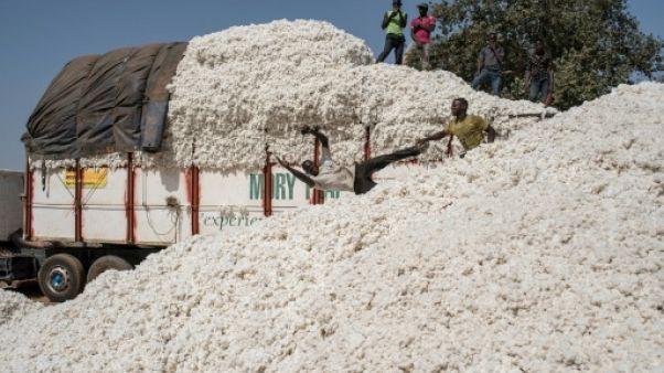 La récolte du coton au Bénin: une ruée monopolistique vers l'or blanc