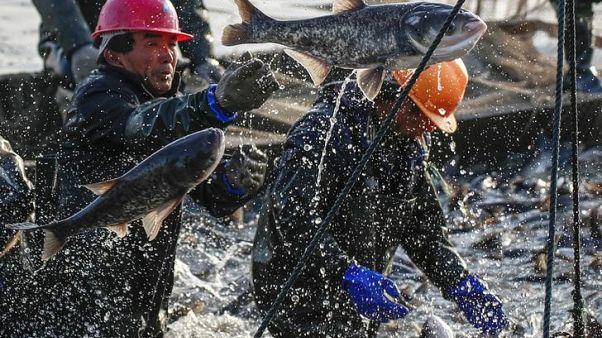 دراسة: سفن الصيد الصينية تسافر لأبعد مناطق وتصيد أكبر كميات من السمك
