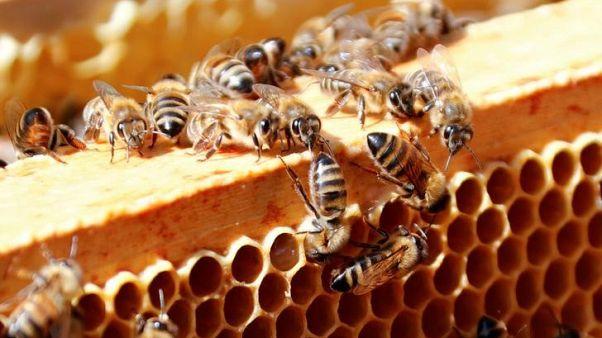 هيئة أوروبية: المبيدات الحشرية تهدد النحل