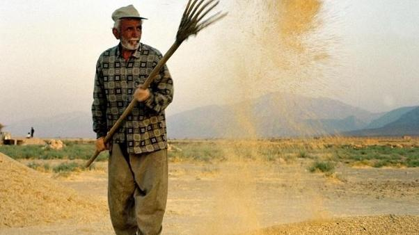 تجار: إيران تشتري نحو 120 ألف طن من الشعير في مناقصة