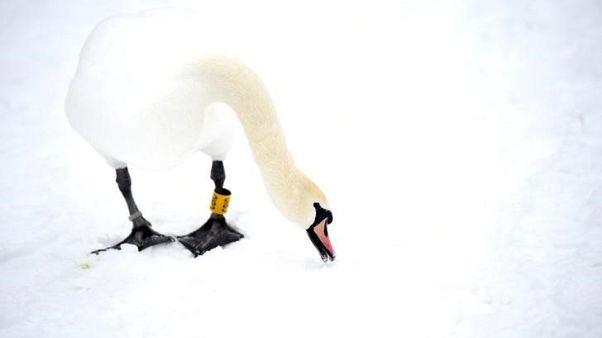 العواصف الثلجية تصيب أيرلندا بالشلل وبريطانيا تستدعي الجيش