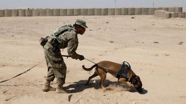 تقرير للبنتاجون: الجيش الأمريكي يسيء معاملة الكلاب رغم قيامها بأدوار بطولية