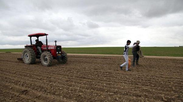 مصدر بوزارة التجارة: العراق يسعى لشراء 50 ألف طن من القمح في مناقصة