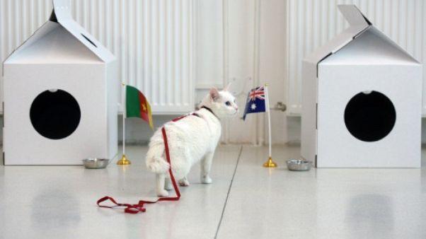 Mondial-2018: Achille, un chat sourd, désigné pronostiqueur officiel