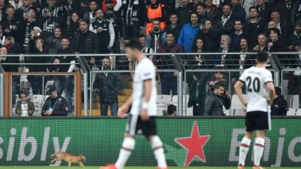 Ligue des champions: le Besiktas poursuivi pour... irruption d'un chat sur la pelouse