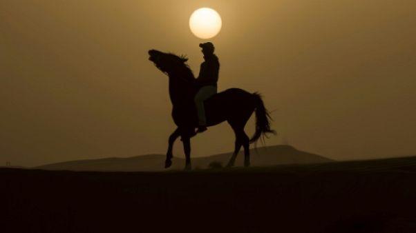Des étalons dans une tempête de sable: défi équestre dans le désert marocain