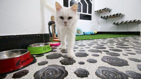 قطط البصرة في العراق تنعم بالرفاهية في فندقها الخاص