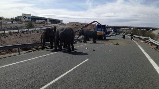 نفوق فيل في حادث انقلاب شاحنة سيرك في إسبانيا