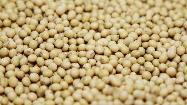 أسعار الصويا والذرة تهبط في أمريكا بعد إدراجهما على قائمة رسوم صينية