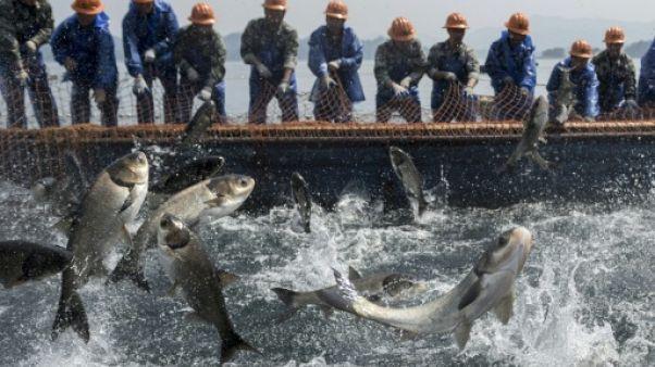 """En Chine, avec """"l'armée"""" de pêcheurs du lac des Mille-îles"""