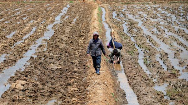 برنامج الأغذية العالمي يريد زيادة المساعدات لكوريا الشمالية