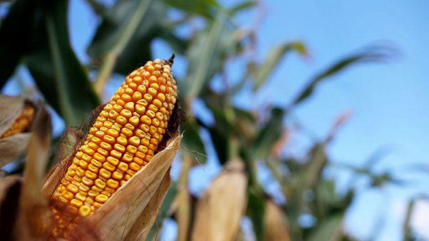 U.S. farmers plough ahead with plantings as China trade war fears ebb