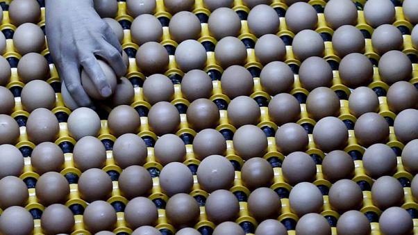 دراسة صينية: تناول بيضة في اليوم يقلل خطر الإصابة بأمراض القلب