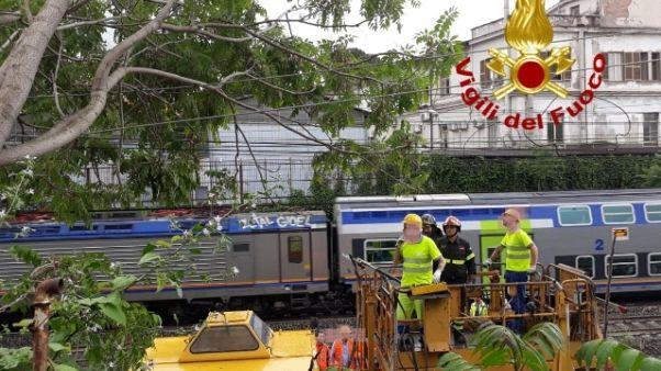 Albero cade su cavi,cancellati 25 treni